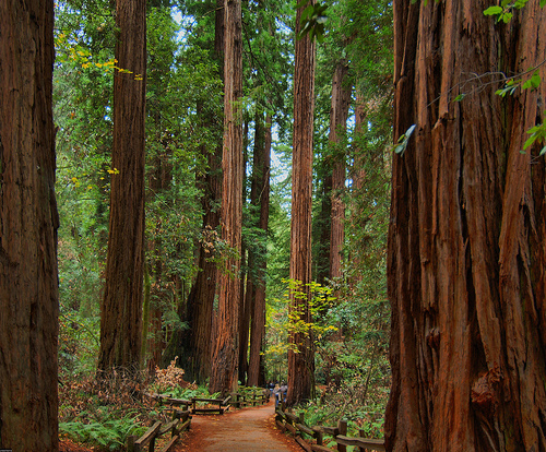 hiking-redwood-national-forest