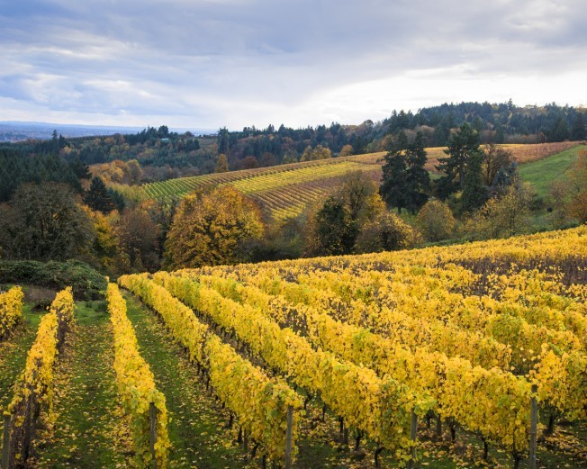 NR_WineCountry_OregonWineCountry_130493222_shutterstock_RobertCrum-652×521